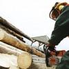 ☂ Kādas ir meža nozares darbinieku vidējās mēnešalgas Latvijā