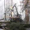 ☂ Vai šoziem iespējams veikt mežizstrādi?
