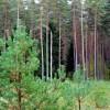 Pieejams ES atbalsts mežu kopšanai
