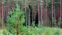 Meža apsaimniekošanā vajadzīga gan pieredze, gan zināšanas