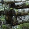 Aicina aizstāvēt mežsaimniecības intereses