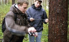 ☂ Cik patiesībā maksā meža inventarizācija