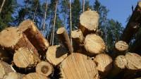 ☂ Koksnes tirgus aktuālās tendences