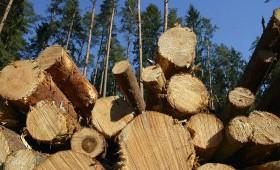 ZM: Meža pārraudzības procesi ir jāpārskata un jāpilnveido
