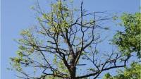 ☂ Gaisa piesārņojuma ietekme uz mežu un cilvēkiem