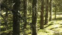 Latvijas meža nozares eksportvērtība būtiski pieaugusi