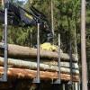 ☂ Ja gūti ienākumi no meža vai kokmateriālu pārdošanas, jāiesniedz ienākumu deklarācija