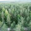 Latvijā meža platība pēdējo 80 gadu laikā ir divkāršojusies