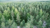 ☂ Eiropas mežu stāvoklis 2020. gadā
