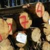 ☂ Jaunās kontrolētas koksnes standarta prasības grūti izpildāmas