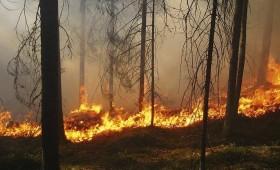 51 meža ugunsgrēks mēneša laikā