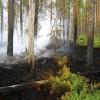 Pieejams atbalsts ugunsgrēkos un dabas katastrofās iznīcinātu mežaudžu atjaunošanai