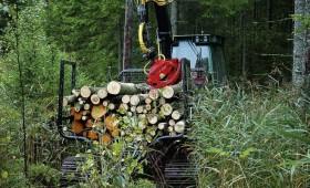 Sals un sausums veicina mitro cirsmu izstrādi valsts mežos