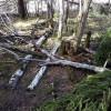 Mežsaimnieka darbs ir audzēt mežu nevis saņemt kompensāciju