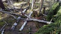 Vai ir iespējama gudrāka dabas aizsardzība?