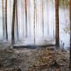 Šogad mežs dedzis 10 reizes vairāk nekā pērn