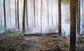 Noslēdzies meža ugunsnedrošais laika posms