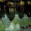 Ziemassvētku eglītes no AS «Latvijas valsts meži»