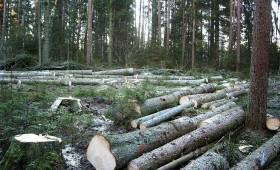 Meža īpašnieku biedrība saskata pretrunas ar saimnieciskās darbības pozitīvu ietekmi