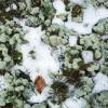 Dabas skaitīšanas rezultāti liecina par mežu biotopu kvalitātes samazināšanos