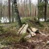 ☂ Gada dzīvotne – dabiski boreālie meži