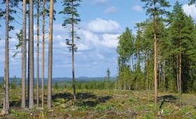 Valsts meža teritorija ik gadu pieaug par ~1 tūkst. ha