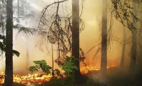 Klimata izmaiņas Latvijā arvien pieaug