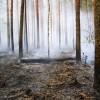 Mežos paaugstināta ugunsbīstamība