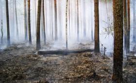 Ogleklis uzkrājas meža augsnē