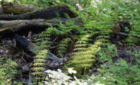 Latvijas Dabas fonds uzvar tiesā Valsts meža dienestu procesos par mikroliegumu atcelšanu