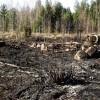 Ar uguni mežā jārīkojas atbildīgi