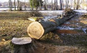 Vai koki pilsētā ir problēma?