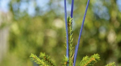 Vasara – laiks meža platību kopšanai un aizsardzībai