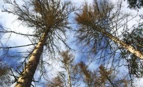 Kur ieguldīt meža naudu?