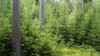 ☂ Meža apsaimniekošanas padomi