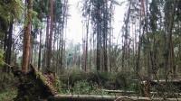 Aicina apzināt vēja postījumus mežā
