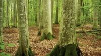 ☂ Vai dižskābaržu audzei lemts iznīkt?