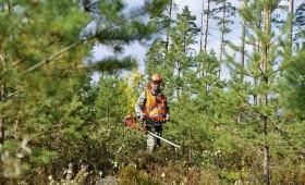 Konkurss mežsaimniecisko darbu veikšanai