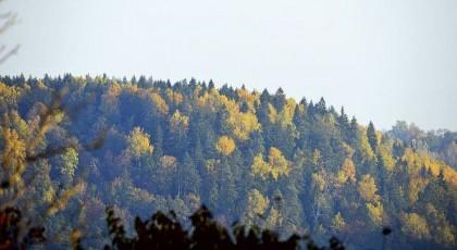 ☂ Vai meža īpašniekiem maksās par skābekļa ražošanu?