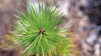 ☂ Meža īpašniekiem pieejams ES atbalsts