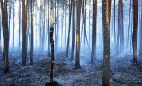 ☂ Izsludina ārkārtas situāciju klimata jomā