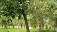 ☂ Kā Itālijā lauksaimniecības zemēs audzē kvalitatīvas papeles
