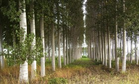 ☂ Plantāciju mežs – vienkāršāk apsaimniekojams