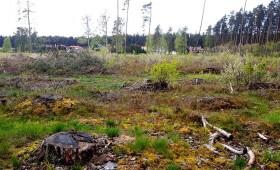 Mandātu komisija atbalsta iniciatīvu par Latvijas mežu saglabāšanu