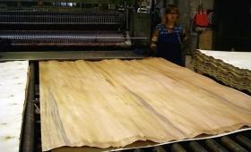 ☂ No papeļu koksnes ražo saplāksni