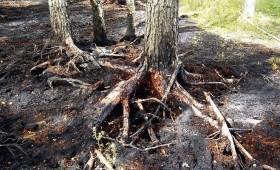 Meža ugunsgrēki turpinās
