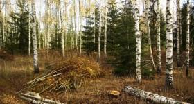 ☂ Plantāciju meža brīvība