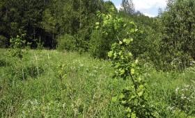 ☂ Vai Latvijā ir parastā ozola meži?