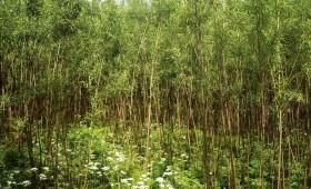 ☂ Kas ir kokaugu stādījumi lauksaimniecības zemēs?