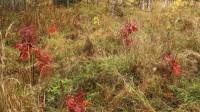 ☂ Dalās pieredzē par ozolu mežu audzēšanu